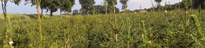 Soorten elferink kerstbomen - Tapijt iedereen bochart verkoop ...